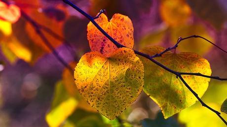 Miķeļdienas pārgājiens meklējot rudeni!